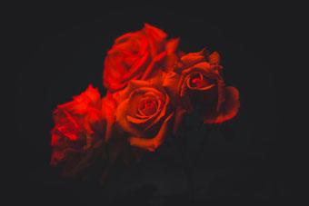 rose-rosse_regali tradizioni san-valentino