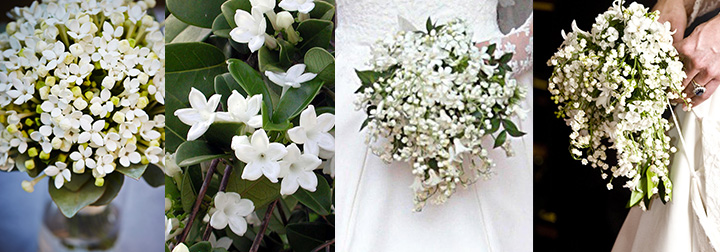 Bouquet Sposa Fiori Darancio.Il Bouquet Di Fiori D Arancio Portafortuna Delle Spose Come