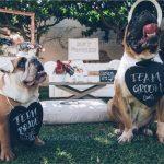 Cani al matrimonio_Wedding-dog-sitter