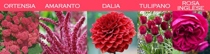 Immagini di fiori rossi in diverse tonalità: ortensia, amaranto, dalia, tulipano, rosa inglese